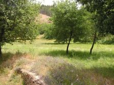 20 hectares of land, fenced, with water and electricity, Abrunheira, Arganil