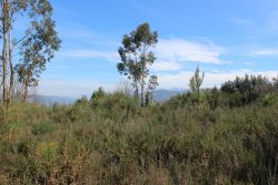 Building plot of 1.7 ha (<€ 3 / m2) with views of three mountain ranges, Vila Cova de Alva, Arganil