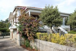 Summer offer: House with land with many productive trees, Cancela, Santa Comba Dão