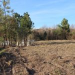 Almost 1 ha of building land on the outskirts of Tábua (<7.5 € / m²)