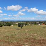 Well maintained house with land of 1.2 ha, Midões, Tábua